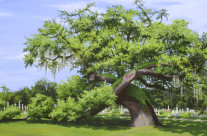 Giant Oak at Magnolia Cemetery